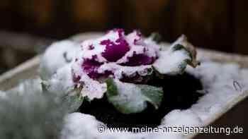 Der Garten im Winter: Pflanzen mit Schnee bedeckt – trotzdem gießen?