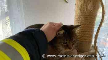 Katze fällt in Kamin - Feuerwehr ist zu langsam, doch es gibt ein Happy End