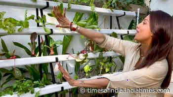 Healthy treat! Shilpa Shetty shares a glimpse of her hydroponic farm