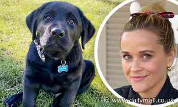 Reese Witherspoon reveals she has another new puppy