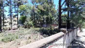 Jofre y un grupo de vecinos buscan detener la tala de árboles históricos - lanoticiaweb.com.ar