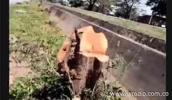 Denuncian cientos de árboles talados para obras civiles en la ciudad de Yopal - W Radio