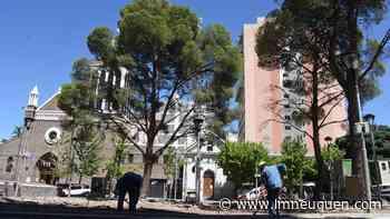 Tras la tala de un árbol, la Muni explicó las obras sobre la Avenida Argentina - LM Neuquén