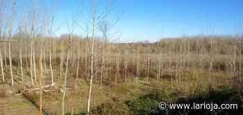 Autorización de tala de árboles para madera - La Rioja