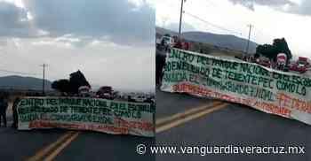 Denuncian tala clandestina de árboles en el Cofre de Perote - Vanguardia de Veracruz