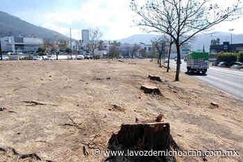 Tala de árboles en salida Mil Cumbres porque estaban enfermos: SCOP - La Voz de Michoacán