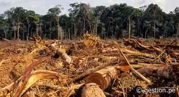 Natura: Brasil no está haciendo demasiado para frenar tala ilegal - Diario Gestión