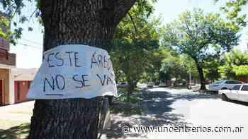 Vecinos de bulevar Racedo firmes contra la tala de árboles - Diario UNO de Entre Ríos