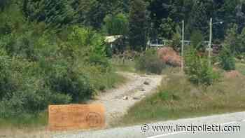 Mascardi: tras hacer una brutal tala de árboles, los encapuchados venden leña - LMCipolletti.com