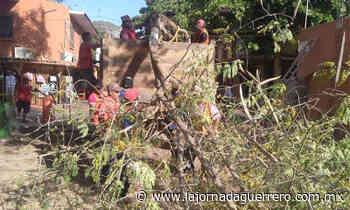 Protestan vecinos por la tala de árbol de moringa en la obra de Paseo del Pescador - La Jornada Guerrero