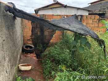 Polícia Civil destrói pés de maconha em Campos Altos - G1