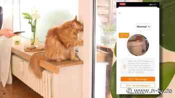 """Was meint sie mit """"Miau""""?: App soll Sprache der Katze übersetzen"""