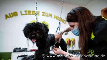 Corona-Lockdown in Bayern: Auch Hundefriseure müssen geschlossen bleiben - anders als in NRW