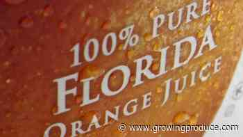 Challenge Builds To Protect Florida Citrus Interests From Unfair Trade