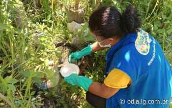 Volta Redonda organiza estratégia de prevenção à dengue - O Dia