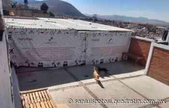 Denuncian a escuela canina por maltrato animal - Noticias de San Luis Potosí - Quadratín San Luis