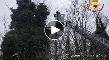 Maltempo, Potenza: intervento dei vigili del fuoco per alberi pericolanti - Basilicata24