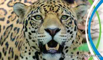 Lanzan grito de ayuda para alimentar a 250 animales silvestres en Santander - W Radio