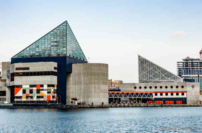 National Aquarium Shut Down Temporarily For Social Distancing, Overcrowding Issues