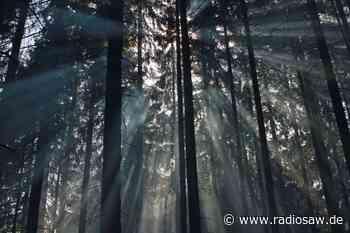 Viel Geld für den Wald