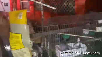 Fort Lauderdale Fire Rescue Crews Rescue Cage of Doves from Burning Home
