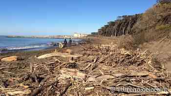 La pineta del Tombolo risucchiata dalle onde - Il Tirreno