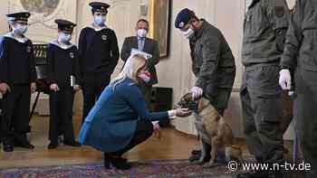 Corona bei Wiener Sängerknaben?: Spürhunde trainieren Virenerkennung