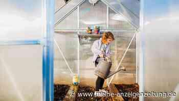 Gewächshaus bauen: Gründe, warum ein eigenes Glashaus sinnvoll ist