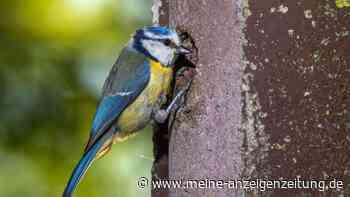 Nistkasten finden: Der perfekte Nistkasten für jeden Vogel