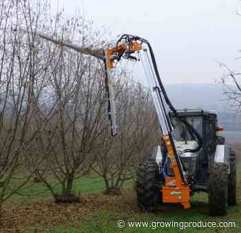 Mechanized Pruning Tools Growing on More Tree Fruit Producers