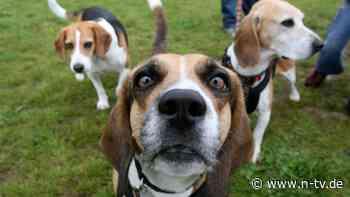 Nach Skandal um Versuche: Ex-Tierlabor wird Zentrum für Hunde