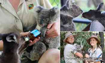 Ash the koala and Frankie the rescue joey become best friends at Australian Reptile Park