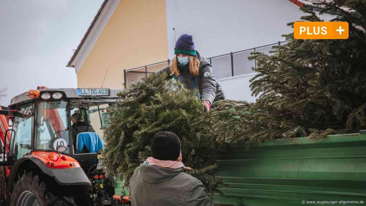 Schöne Überraschung für Christbaumsammler im Kreis Landsberg