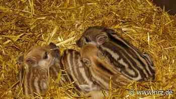 Kleve: Erster Nachwuchs im Jahr 2021 im Tiergarten - NRZ