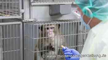 Deutscher Tierschutzbund schockt mit Zahlen: Hamburg ist Spitzenführer bei Tierversuchen