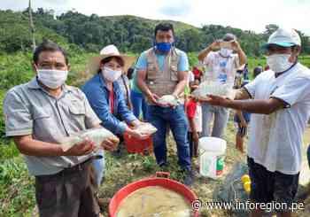 San Martín: Piscicultores de Uchiza iniciaron primera cosecha de tilapia - INFOREGION