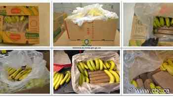 RCMP say 21 bricks of cocaine arrived in Kelowna in 2019 with banana shipment