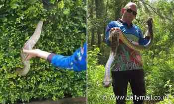 Shocking moment snake catcher hoists a MONSTER ten-foot python out of a Buderim hedge, Queensland