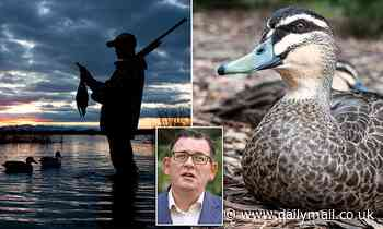 Victorian Premier Daniel Andrews is pressured to ban duck hunting after GMA survey