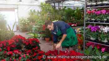 Garten-Profis im Winter: Das machen die Experten, wenn die Natur schläft