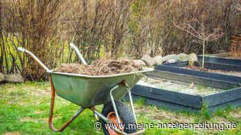 Kompost verwenden: Natürlichen Dünger richtig einsetzen