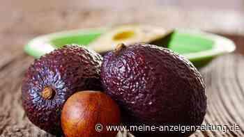 Avocado-Bäumchen züchten: Wie es auch ohne tropische Temperaturen klappt