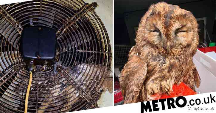 Owl rescued after spending two days stuck in greasy extractor fan