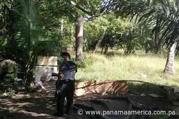 La Policía Nacional desmantela dos galleras clandestinas, una en Alanje y otra en Boquerón - Panamá América
