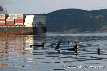 Female orcas less likely to feed in presence of vessel traffic: study