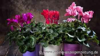 Achtung giftig: Diese fünf Zimmerpflanzen sind gefährlich
