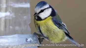 Futterspender für Vögel bauen: So einfach geht es