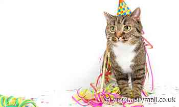 Covid outbreak at a cat's birthday party infects 15 people in a small Chilean town