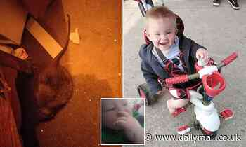 Horrified mother, 34, shaken after son was attacked by a RAT in the middle of the night