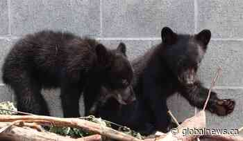 Supreme Court won't review ruling in favour of officer who refused to euthanize bears